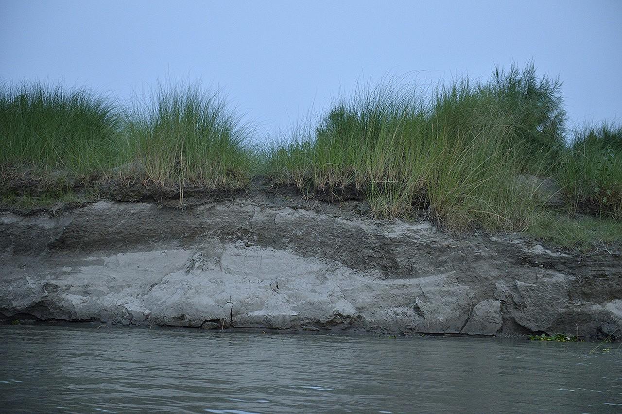 | Chor (île) de Narayanpur sur le fleuve Jamuna (brahmapoutre) dans la région de Kamarjani au Nord du Bangladesh à la frontière avec l'Inde. Le chor est un amas de sédiments pouvant faire plusieurs kilomètres carrés