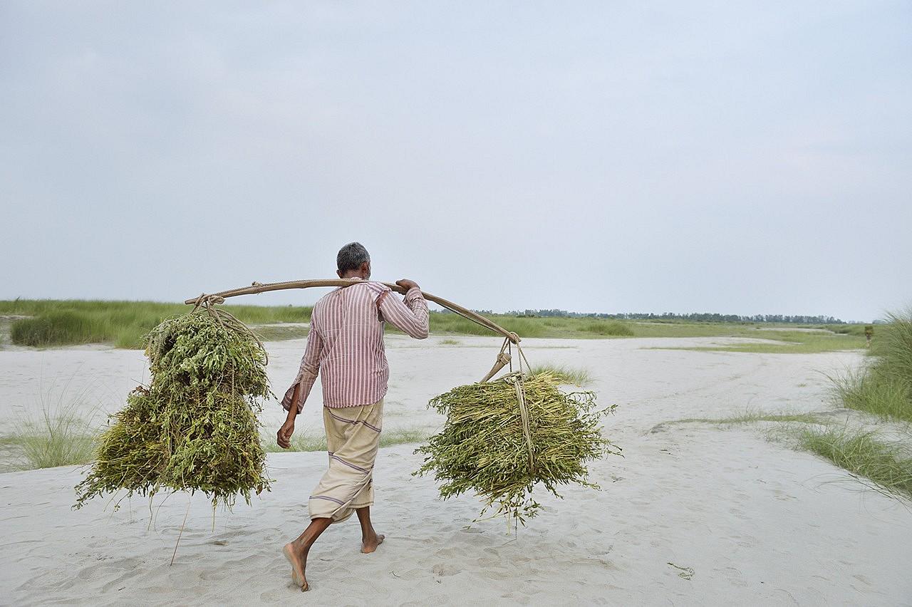 | Chor (île) de Vatibural Keranir sur le fleuve Jamuna (nom bangaldais du Brahmapoutre) dans la région de Kamarjani au Nord du Bangladesh. Ces îles très fertiles disparaissent et apparaissent selon les changements de courant du fleuve tous les 10-20-30 ans ... Impossible dans ces conditions de connecter les chors au réseau électrique.