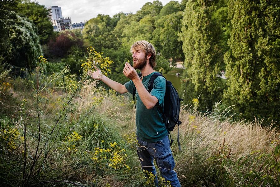 A la découverte des plantes sauvages et leurs vertues aux Buttes Chaumont, avec Christophe de Hody.
